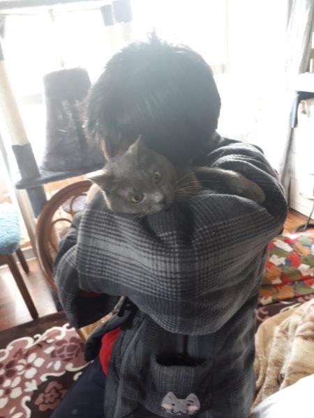 猫エイズ治療を始めて約1ヶ月半経過した、灰色猫ししゃものこと
