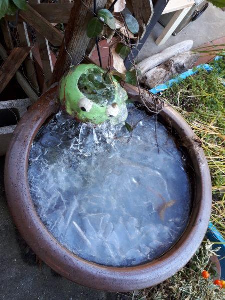 寒くて凍る睡蓮鉢とDIYしたカエルの噴水から垂れるつらら