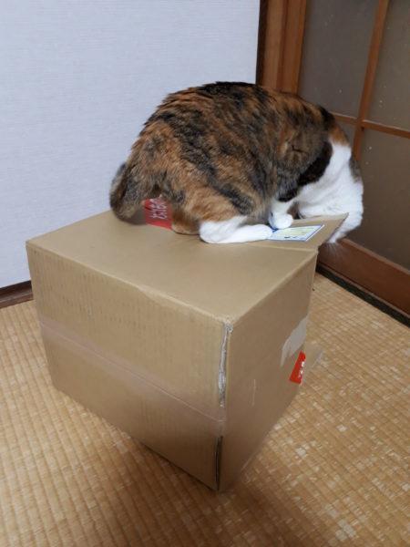あつ森のマーメイドなソファを、猫用サイズで再現DIY(ФωФ)【あつまれどうぶつの森】その1