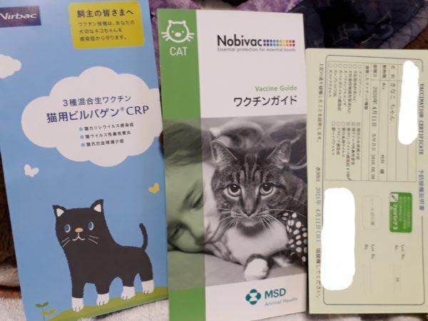 """縞三毛猫なめこのワクチン接種にあたり、""""ワクチン抗体価検査""""を受けてみました。"""