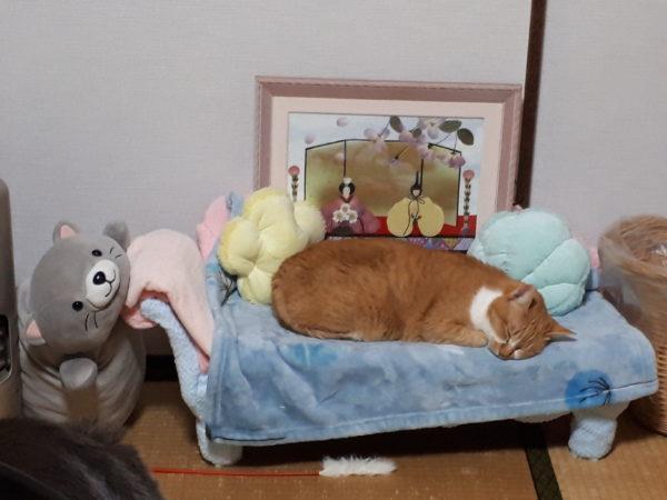 ひな祭りの押し花とマーメイドなソファと黄色猫きなこ