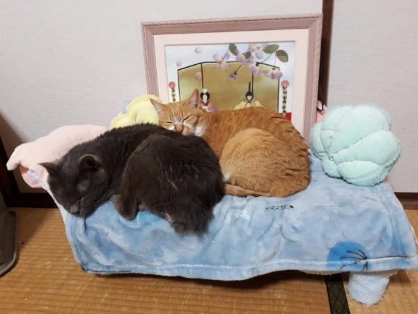 手作りソファーで寛ぐ猫