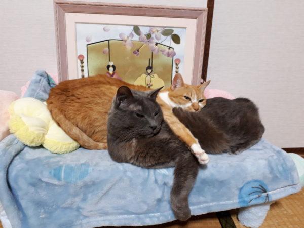 あつもりマーメイドソファに寝る猫たち