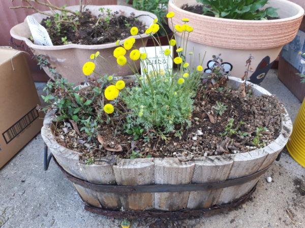春の園芸、花ほたる