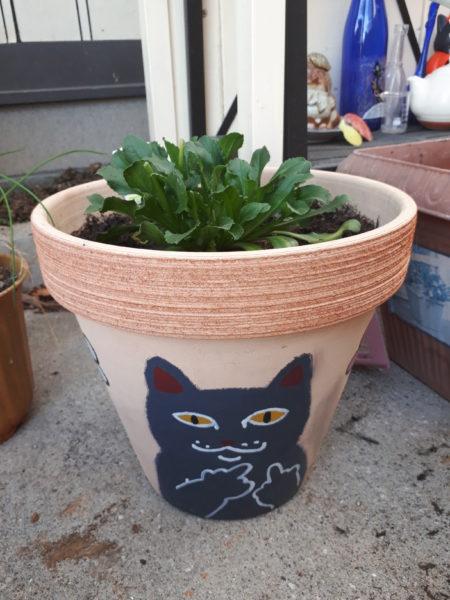 リップンデップ的な猫にチロリアンデイジー