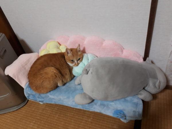 コロナ禍の帰省。やっぱりお家で過ごし隊、マーメイドなソファと黄色猫きなこ
