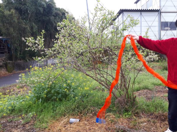コロナ禍の帰省。やっぱりお家で過ごし隊、ブルーベリーの木に鳥避けネット
