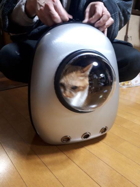 宇宙船チックな猫のリュック型キャリーと黄色猫きなこと縞三毛猫なめこ