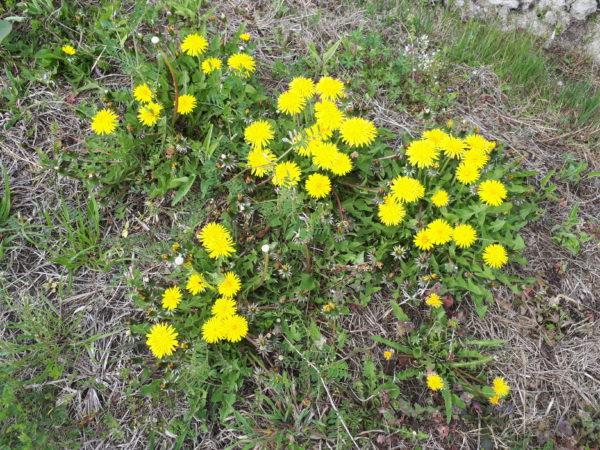 コロナ禍2年目。今年のお花見