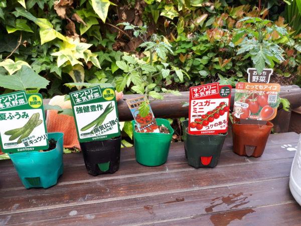 今年も巨大プランター(衣装ケース)で家庭菜園始動。ミニトマトとキュウリ