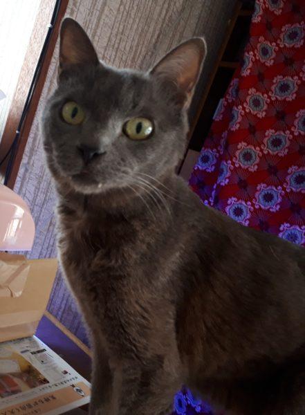 にゃんも。猫エイズ治療4ヶ月経過。