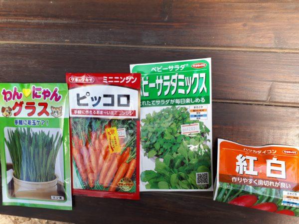 今年も巨大プランター(衣装ケース)で家庭菜園始動。ミニニンジンとサラダ菜とハツカダイコン