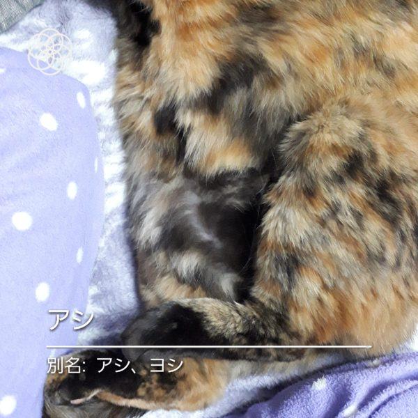 ハナノナアプリで猫を撮影.サビ猫アシ