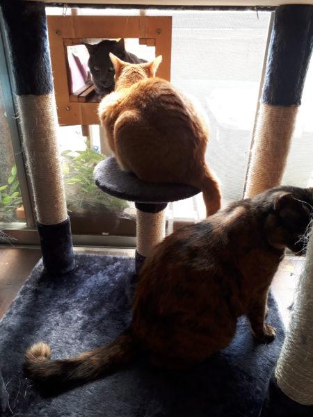 コロナ禍のお休みの日。相変わらずのぷっことししゃもとそして猫たち。