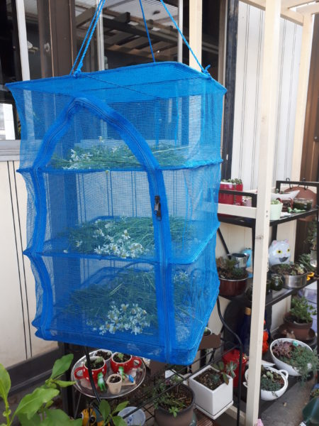 プランター栽培のジャーマンカモミールを自家製ハーブティーに