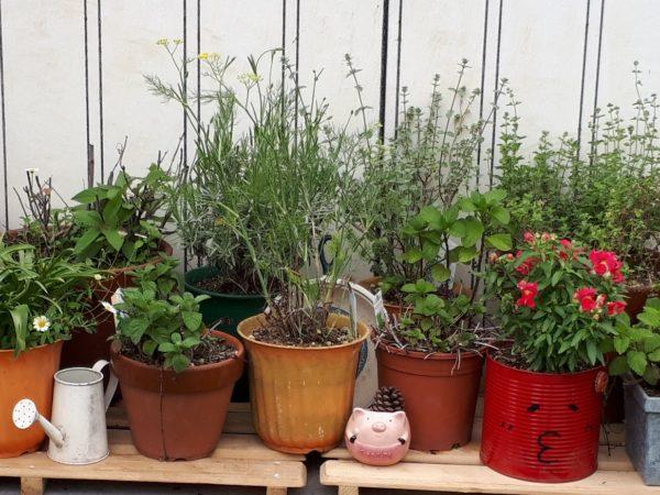 コロナ禍の晴れ間に、土いじりが捗ります、ネギ、サラダ菜、コーン、チューリップ、ハーブ、猫草