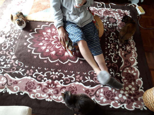 多頭飼い猫と夏支度、換毛期、ヘソ天。灰色猫ししゃもと黄色猫きなことサビ猫しめじと縞三毛猫なめこ