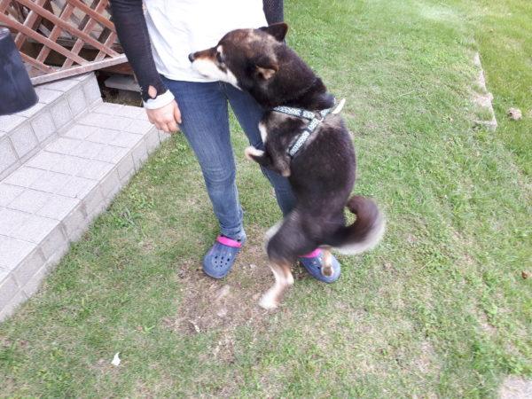 田舎でのんびり、猫と犬と戯れる暮らし