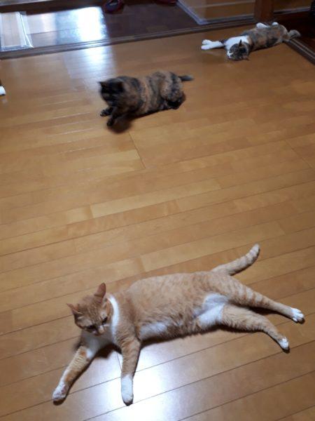 多頭飼いしてる猫4匹に気を使いつつ、燻煙(霧)殺虫剤(加熱蒸散式)を使ってみた。