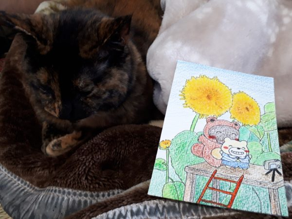 暑中見舞い、夏のイラスト、八重咲きのヒマワリを背景に自撮りするたぬきとシロクマと、サビ猫