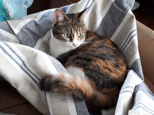 我が家の下着ドロボー縞三毛猫をモデルに、残暑お見舞いの絵はがき描いてみました、水遊びでたらいに浸かってスイカをたべるタヌキとシロクマと、パンツを盗むなめこ