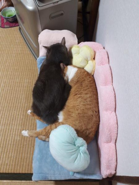 高齢シニア義弟まめちゃんの為に猫用ソファを手作りしてみた・その1【段ボールと100均商品でDIY】