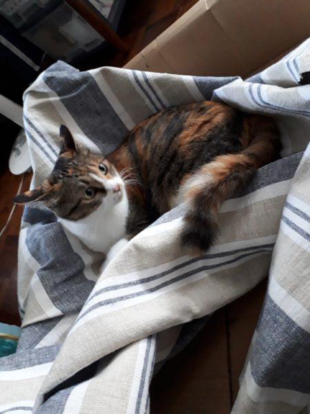 高齢シニア義弟まめちゃんの為に猫用ソファを手作りしてみた・その2【段ボールと100均商品でDIY】