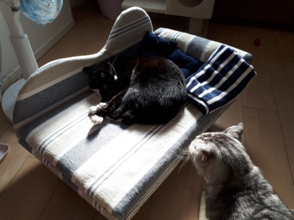 高齢シニア義弟まめちゃんの為に猫用ソファを手作りしてみた・その3【段ボールと100均商品でDIY】