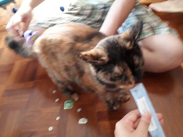 自家製椿油を、有効に活用する方法のご紹介、人と猫の健康維持に優れた効果
