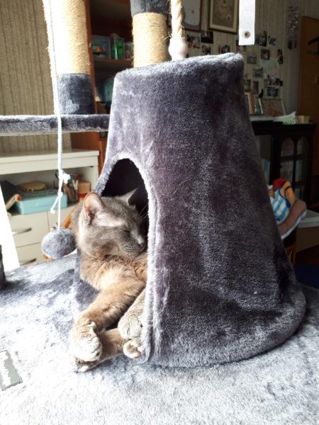突然声が出なくなって、吐き気が止まらなくなった灰色猫ししゃものこと
