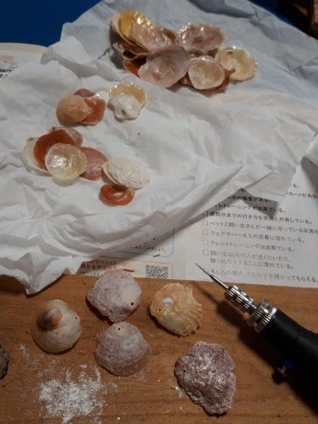 ホタテ、さくら貝、ナミマガシワ、貝殻とシーグラスで、クラゲっぽいウインドチャイムを手作りしてみた