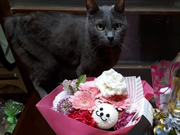 いただき物の猫の生花のアレンジメント+灰色猫ししゃも