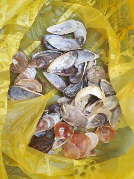 東南アジアのお土産風・カラフルな貝殻とシーグラスで螺旋状のウインドチャイム作ってみた